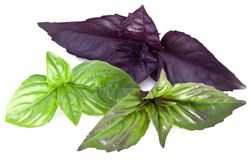 Green and violet basil leaves  on a white. Royalty Free Stock Photography