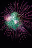 Green and violet colorful fireworks in black background,artistic fireworks. Stock Photography