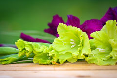Green and violet gladioli flowers Royalty Free Stock Images