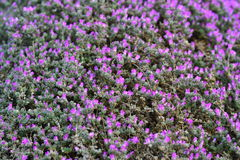 Green and violet. Plants and flowers Stock Photography