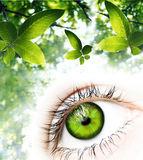 Green Vision. One human eye made of green leaves surrounded by elements of nature.A green vision for a better world Royalty Free Stock Image