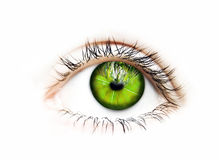 Green vision-eye. One green eye isolated on white illustrating green vision Royalty Free Stock Image