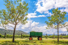 Green Wagon and Vineyard Royalty Free Stock Image