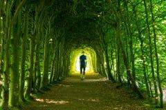 Green walk Stock Image