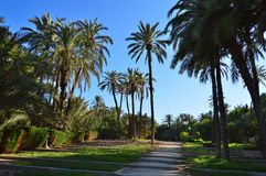 A Distant Fountain And Palm Trees In The Park Royalty Free Stock Photos