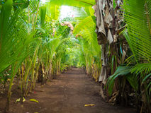 Green walkpath. Walk palms path throught tropical island at sunset Royalty Free Stock Photography