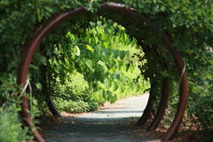 Green Walkway Royalty Free Stock Photography