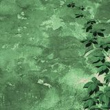 Green wall Stock Image