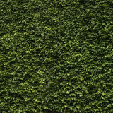 Green wall Royalty Free Stock Images