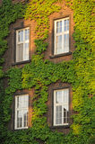 Green wall Royalty Free Stock Photos