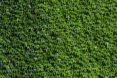 Green Wall Stock Photography
