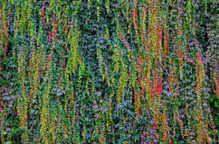 Green wall Royalty Free Stock Photography