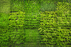 Green wall royalty free stock photo