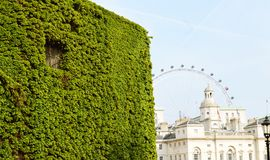 Green wall. Beautiful green wall in central London Stock Image
