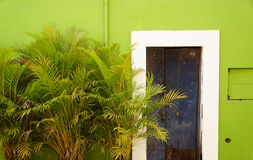 Green wall 1. Blue door on a green wall with plants on the pavement Stock Photo