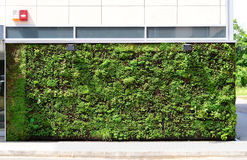Green wall building Royalty Free Stock Photography