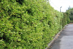 The green wall at the car park. The green wall build by the tree Royalty Free Stock Image