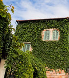 Green wall. The creeper on the wall make the building looks natural Royalty Free Stock Image
