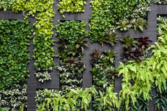 Green wall, eco friendly vertical garden Royalty Free Stock Photos