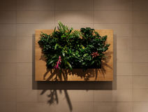 Green wall, eco friendly vertical garden, wall plants decoration Stock Photos