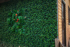 Green wall for ECO wooden house outdoor isolation technology Royalty Free Stock Images