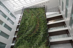 Green wall in the office building Stock Photography