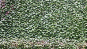 Green wall stock footage
