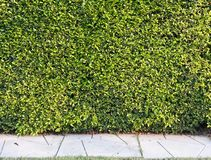Green wall. And pavement Stock Photos