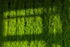 Green wall and shadow shade Royalty Free Stock Photos