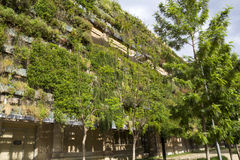 Green wall in an sustainable building Royalty Free Stock Photos