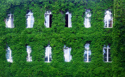 Green wall in a sustainable building, with vertical garden in the facade Stock Image