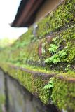 Green on wall Royalty Free Stock Images