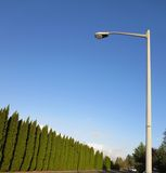Green wall of trees and a lamp post. This is the view of a street in vancouver washington stock photography