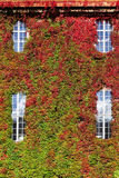 Green wall vertical at Cityhall in Stockholm Royalty Free Stock Photo