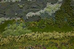 Green Wall or Vertical Garden stock photo