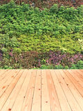Green wall vertical garden with wood floor Royalty Free Stock Photo