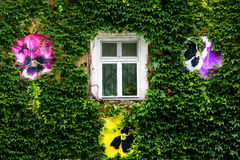 Green wall and window Royalty Free Stock Photos
