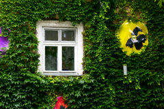 Green wall and window Royalty Free Stock Photography