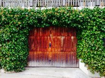 Green wall and wood door Royalty Free Stock Photography