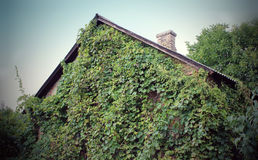 Green walls. The Power of nature. Green House Stock Image
