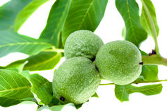 Green walnut Stock Photos