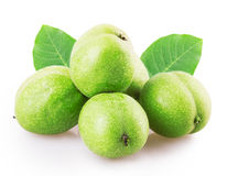 Green walnut Stock Photography