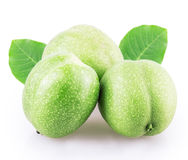 Green walnut Royalty Free Stock Images