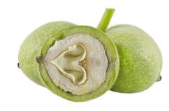 Green walnut isolated on white background royalty free stock photography