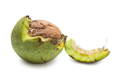 Green walnut peeled away Royalty Free Stock Photo