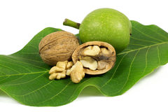 Green walnut and ripe cracked walnut on green leaf isolated on white Royalty Free Stock Photos