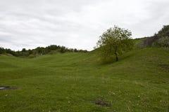 Green walnut tree Royalty Free Stock Photo