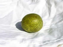 Green walnut Royalty Free Stock Photo