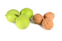 Green walnuts Stock Photography