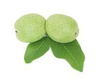 Green walnuts Stock Images